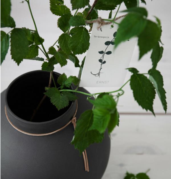 kort-olika-växter-te-arenpris-fran.-ernst-design-600x628