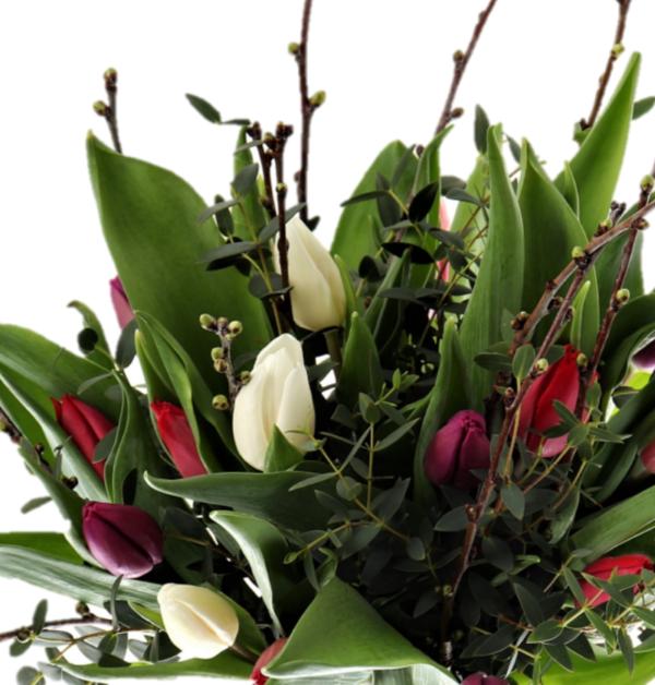 Skicka vackra tulpaner som blombud online- Nilssonsblommor.se